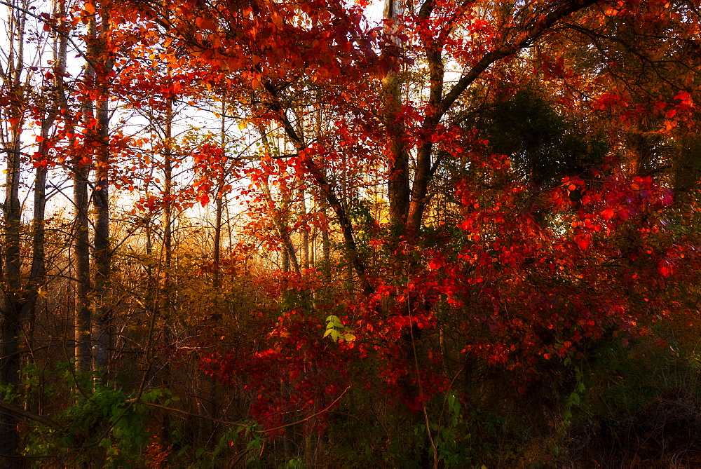 Autumn forest, North Carolina