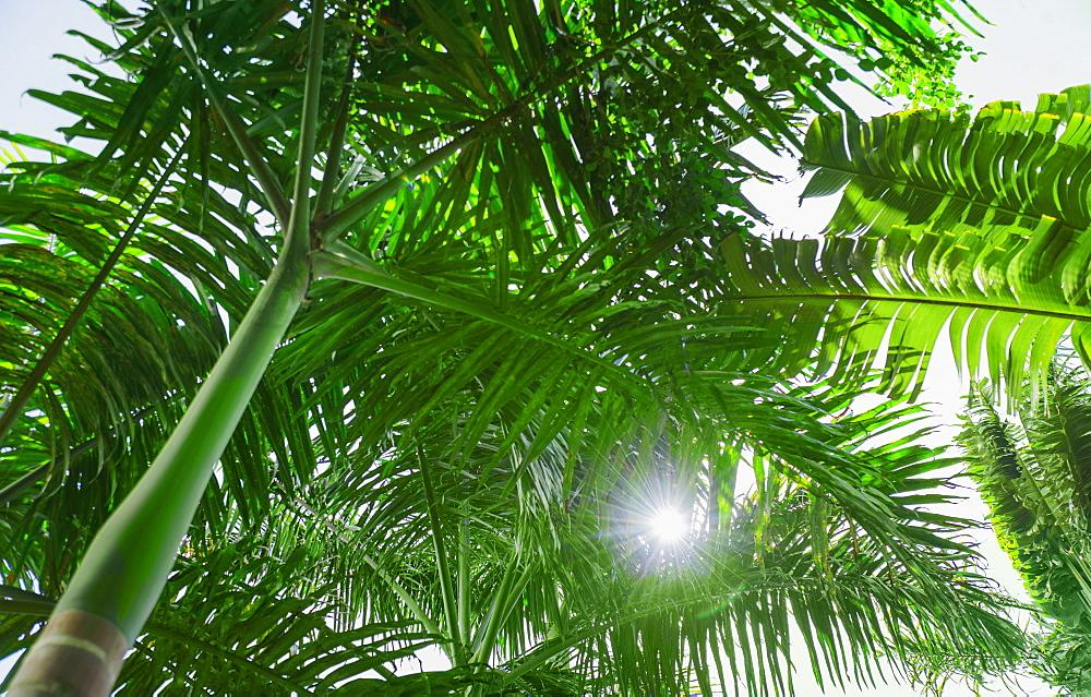 Tropical foliage, Jamaica