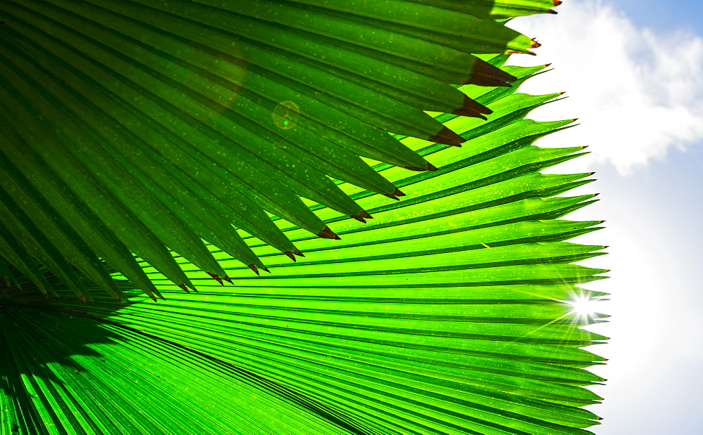 Palm frond against sky, Jamaica