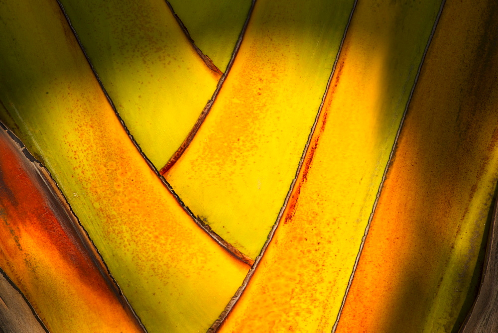 Close-up of palm tree, Jamaica
