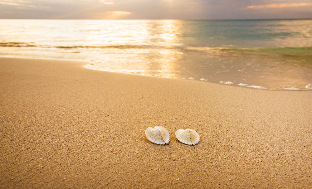 Shells on beach, Jamaica