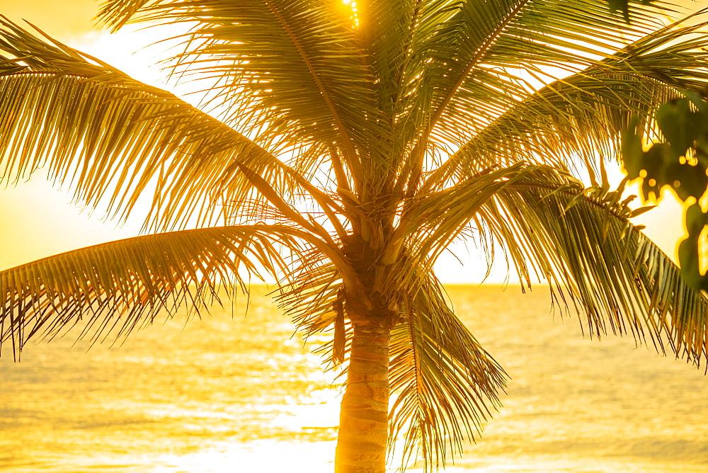 Silhouette of palm tree, Jamaica