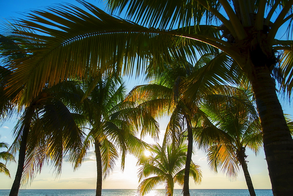 Palm trees and sea, Jamaica