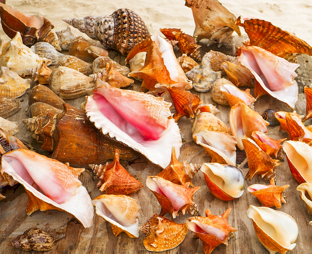 Sea shells for sale, Jamaica