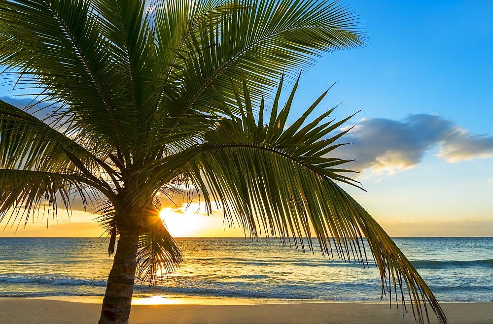 Palm tree on beach at sunset, Jamaica