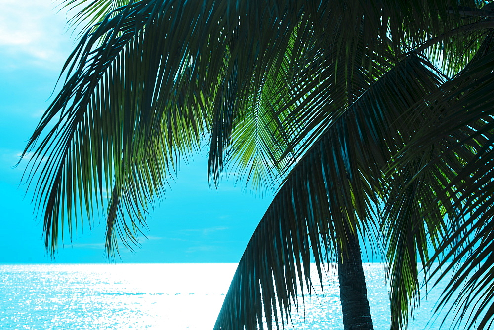 Palm tree and sea, Jamaica