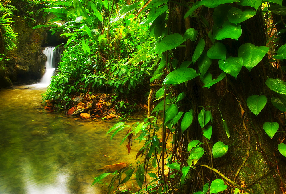 Waterfall in rainforest, Jamaica