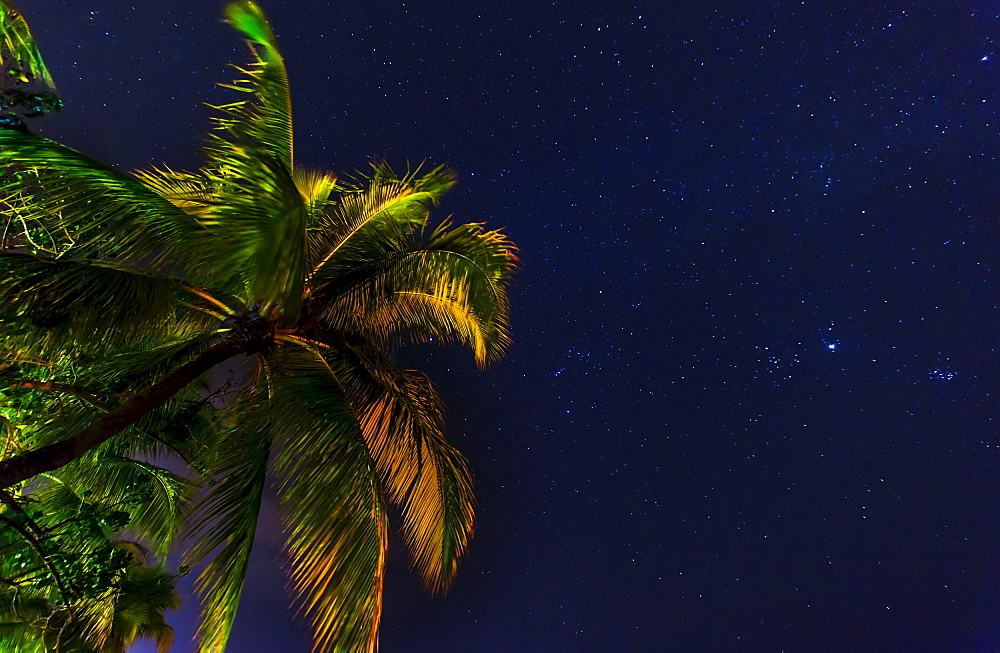 palm tree against starry sky, Jamaica