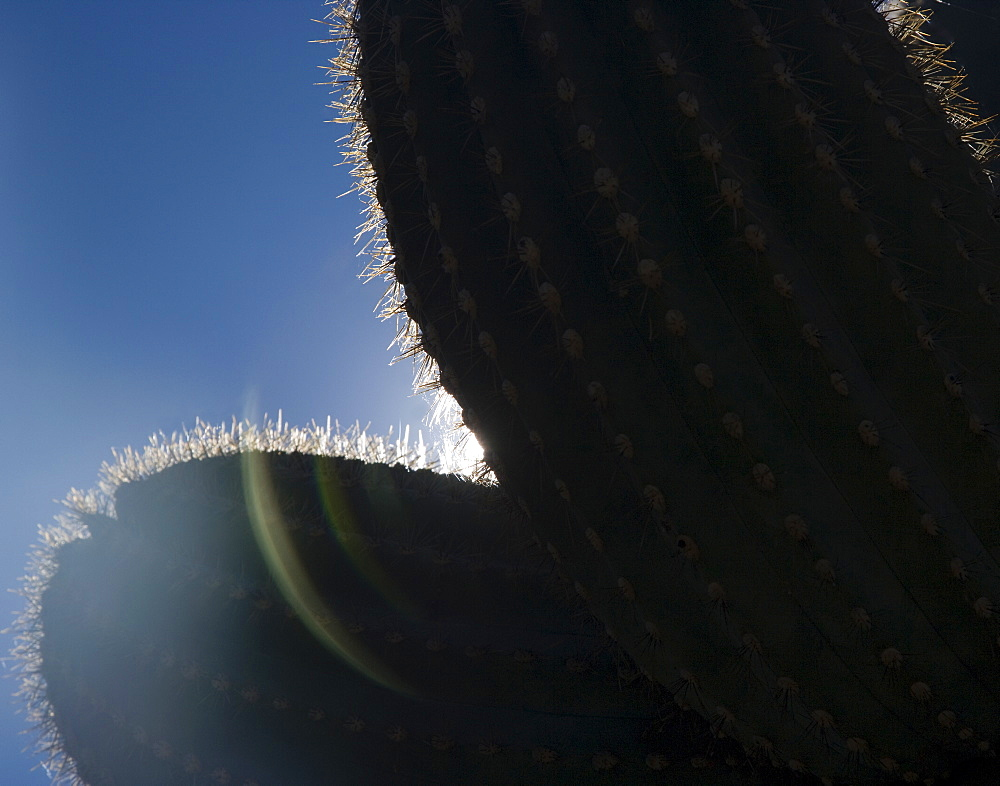 Sun shining behind cactus, Arizona, United States