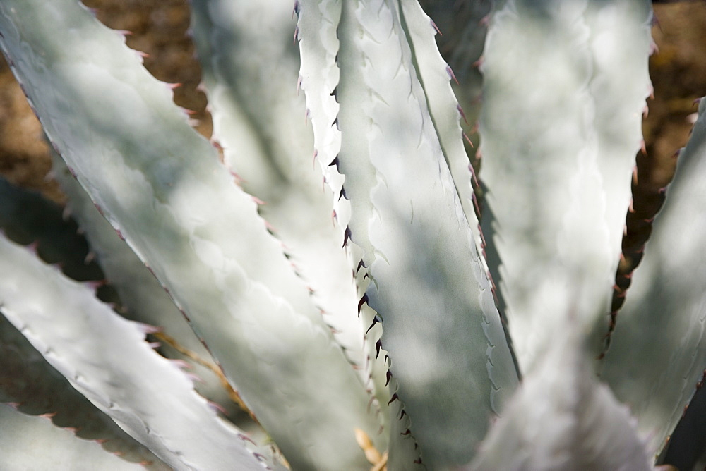 Close up of cactus