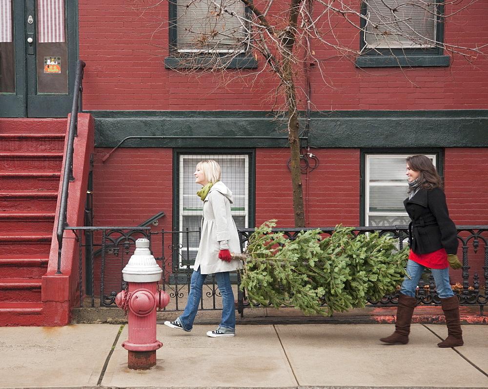 Women carrying Christmas tree on urban street
