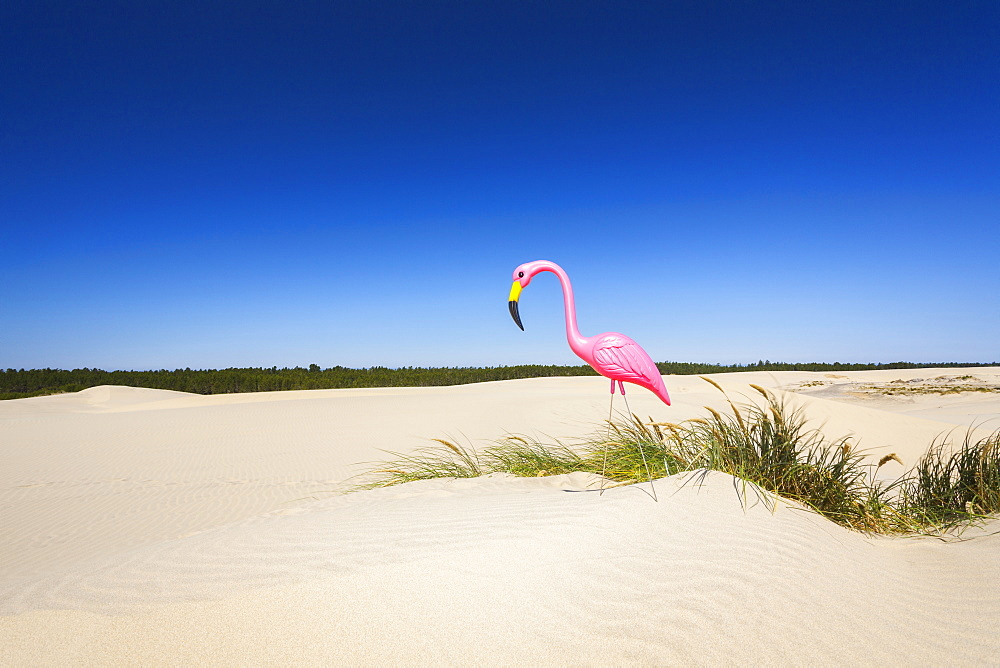 Oregon, Florence, Plastic pink flamingo on sand dune