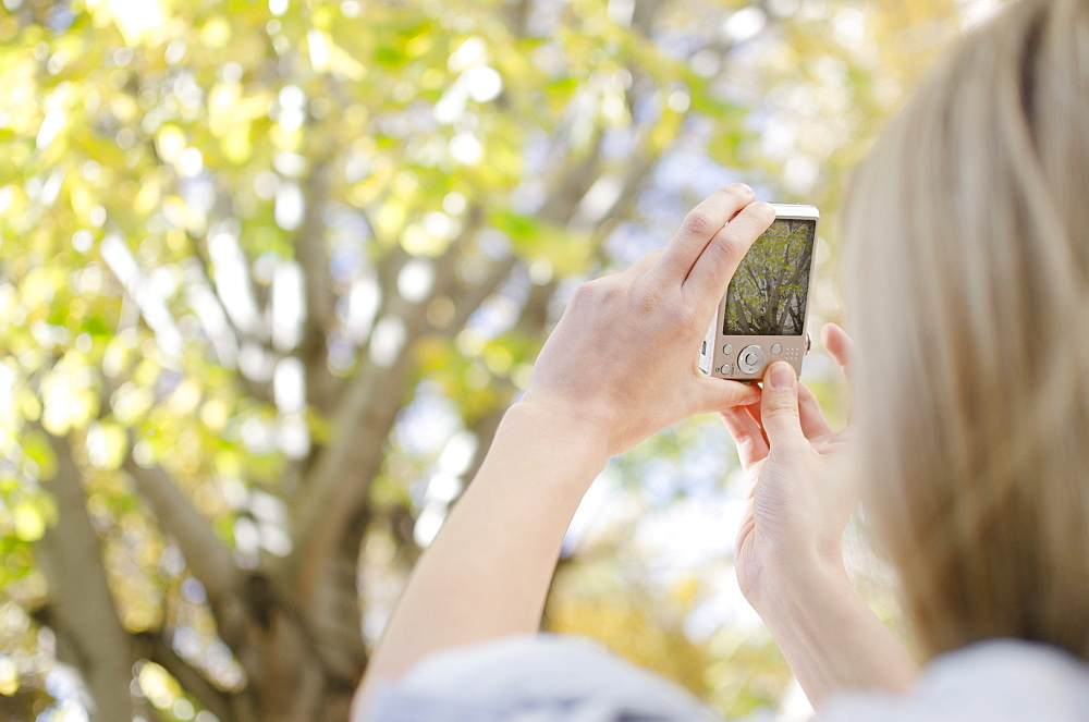Woman photographing tree with cell phone