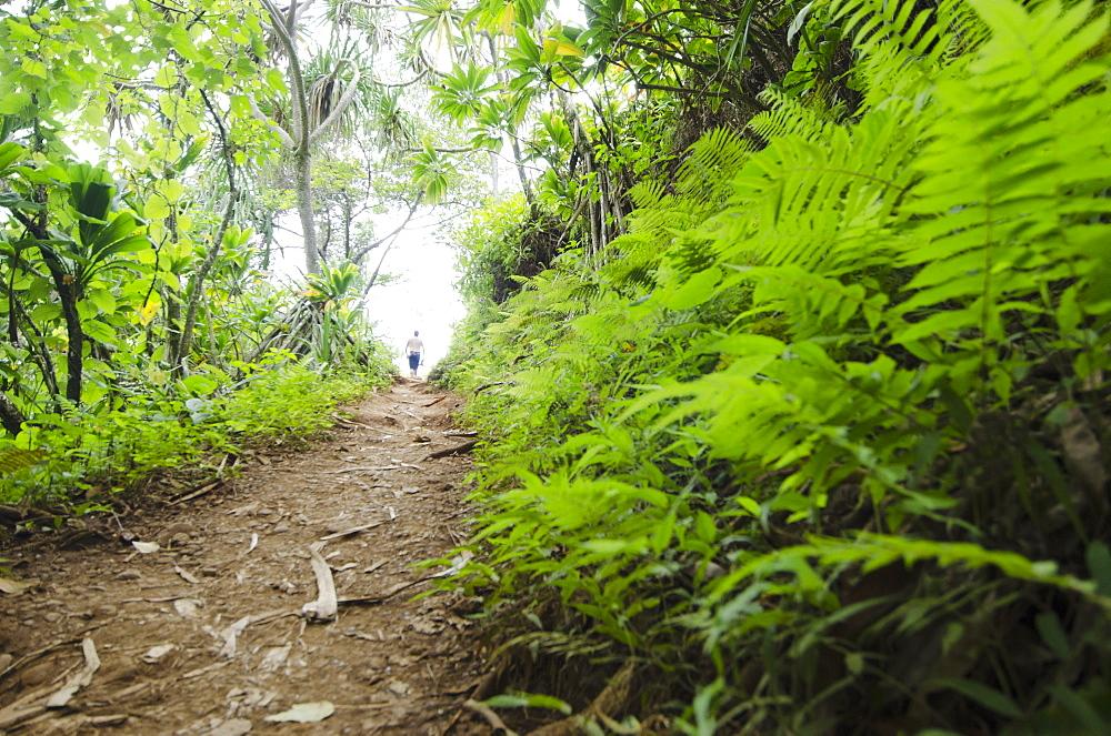 Kalalau Trail, Path in forest, USA, Hawaii, Kauai, Kalalau Trail
