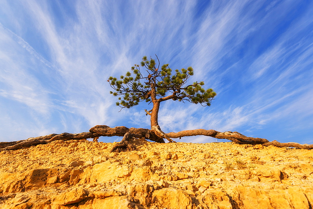 View of tree on top of rock, USA, Utah, Bryce Canyon