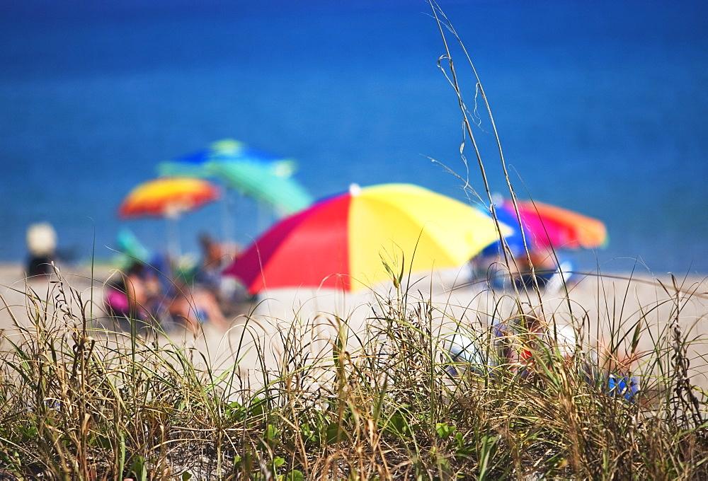 Beach umbrellas by the ocean