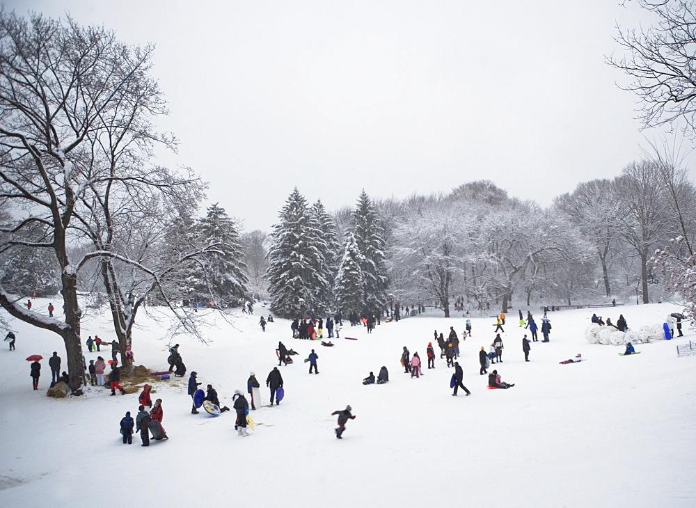 Children sledding in Central Park