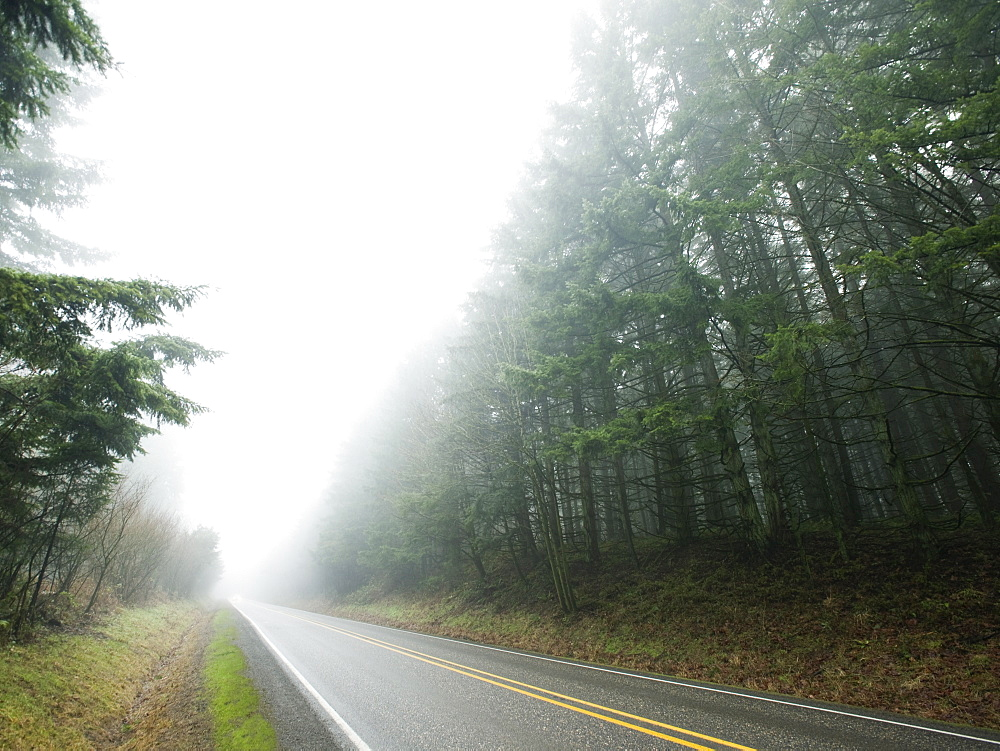 Highway through foggy forest