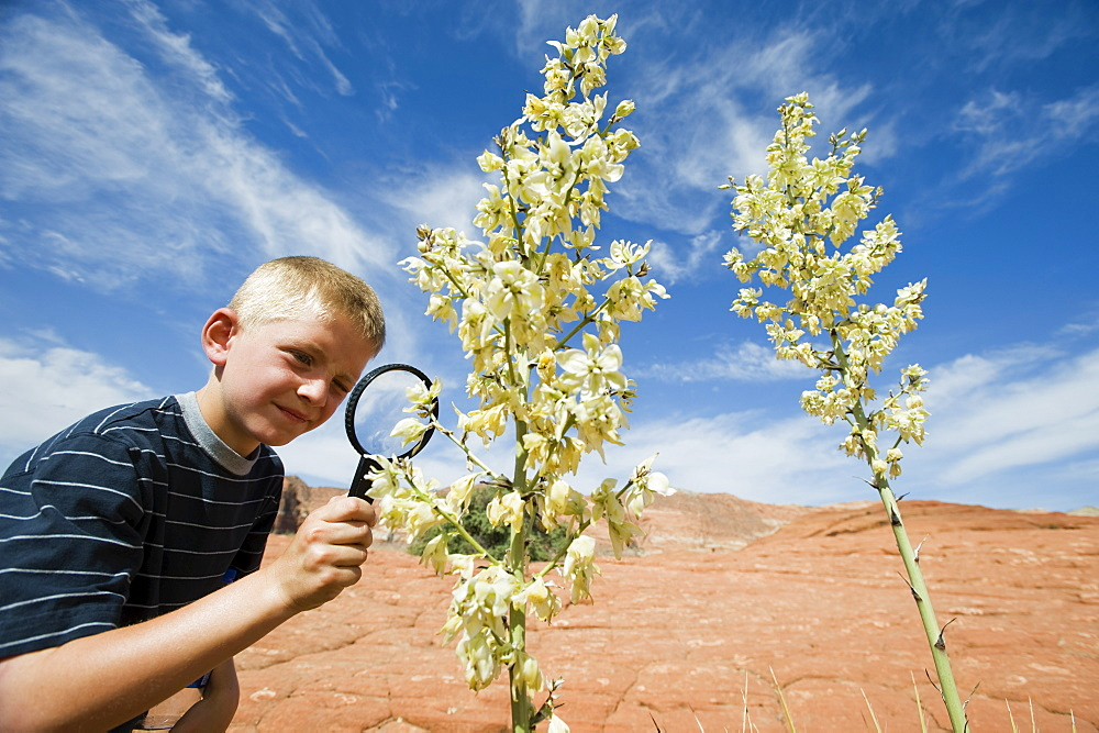 A young boy at Red Rock examining a plant