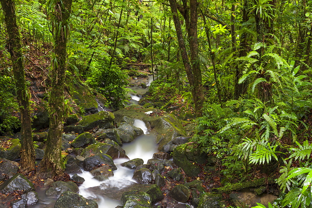 Stream flowing through rainforest, El Yunque, Puerto Rico