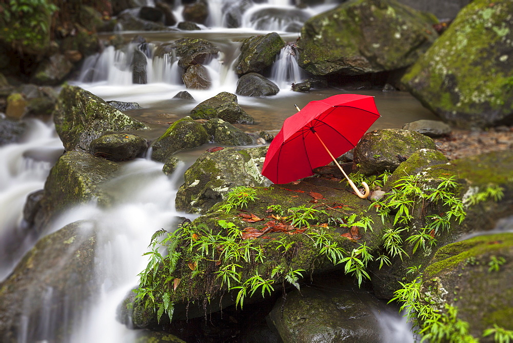 Umbrella left by scenic waterfall, El Yunque, Puerto Rico