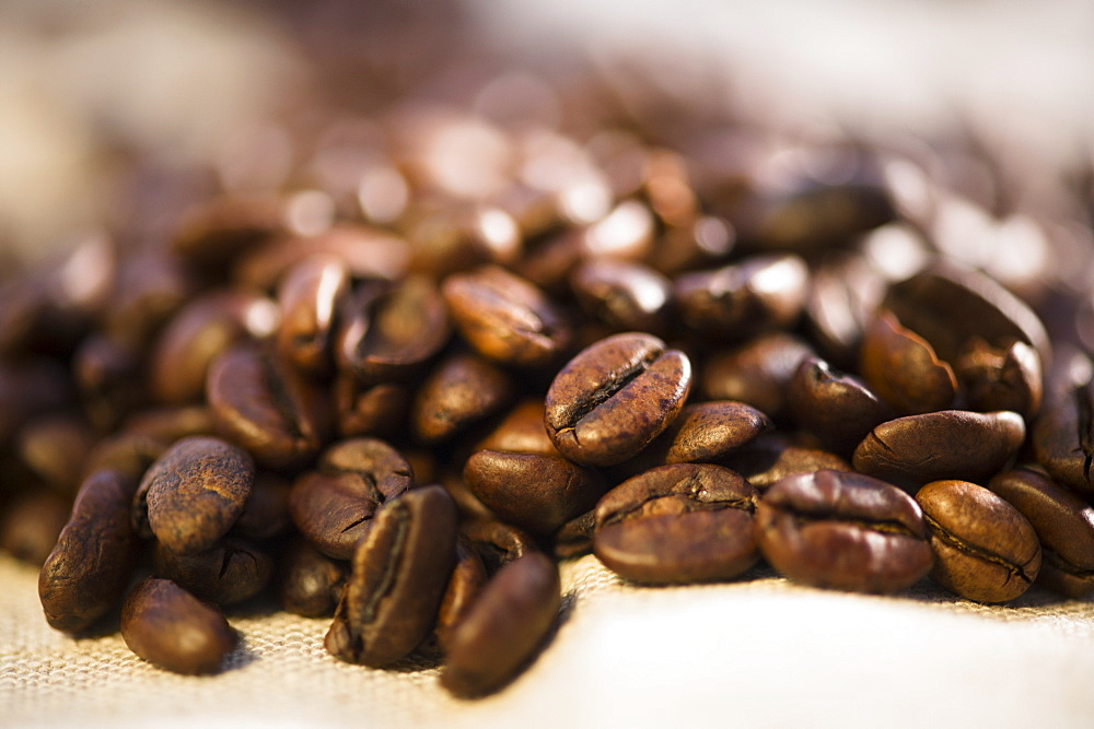 Studio Shot of roasted coffee beans