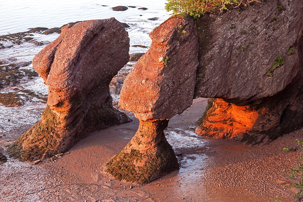Hopewell Rocks at sunrise, New Brunswick, Canada