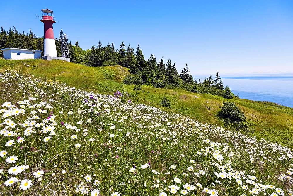 Meadow with flowers and Cape Spencer Lighthouse in background, New Brunswick, Canada