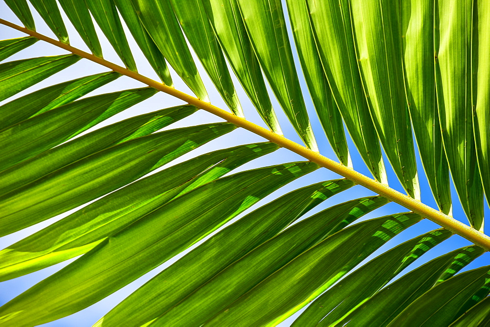 Sunlight in palm leaf, Palm Beach, Florida