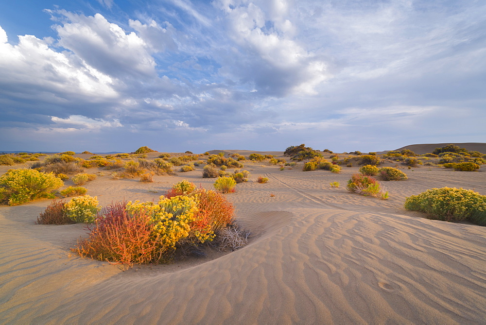 Scenic view of landscape, Christmas Valley Dunes, Oregon