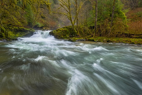 Scenic view of stream in forest, Sweet Creek, Oregon