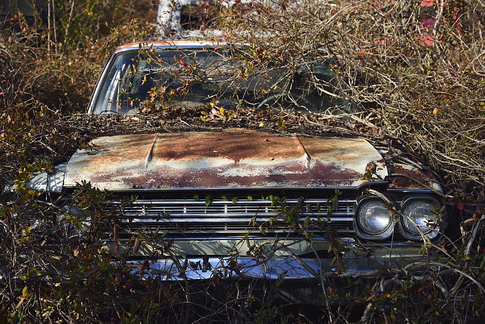 Old abandoned rusty car in bushes, Rural Georgia