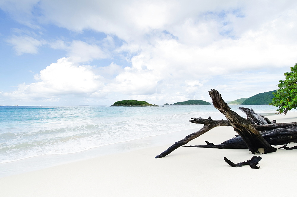 Drift wood on beach, St. John, US Virgin Islands