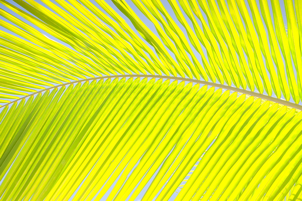 Close-up view of palm leaf