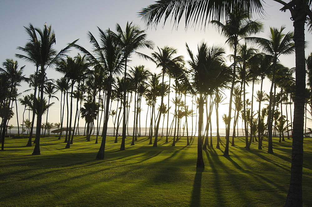 Palm trees at sunset, Punta Cana, Dominican Republic