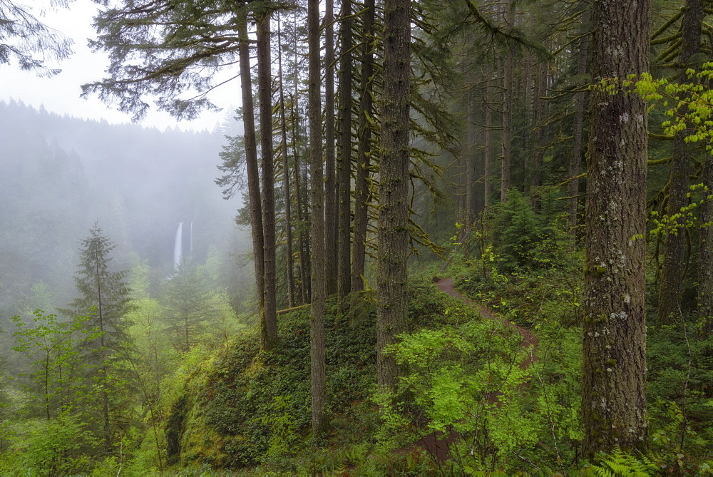 View of forest and North Falls in background, USA, Oregon, Silver Falls State Park, North Falls