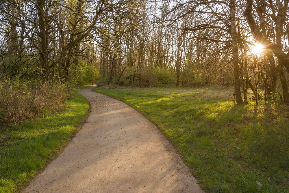 Footpath in park, USA, Oregon, Marion County