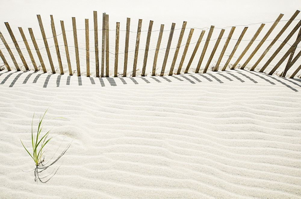 Massachusetts, Nantucket Island, Sand fence on beach - 1178-25678