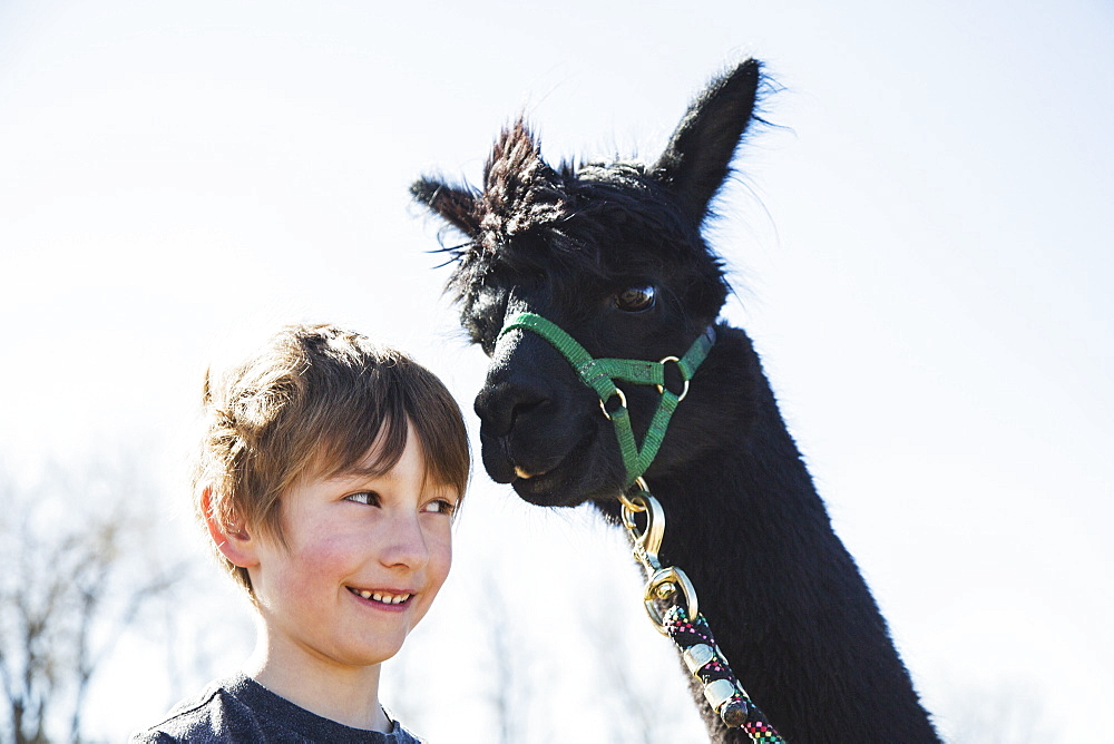 Portrait of boy (6-7) with black alpaca