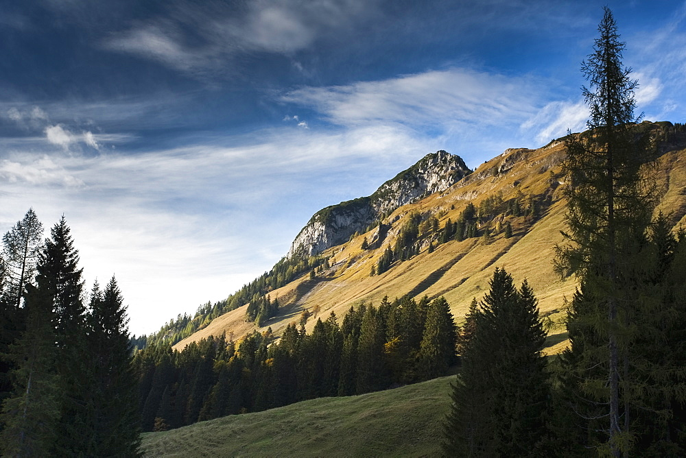 Austria, Salzburger Land, Weissbach, Forest and mountain landscape