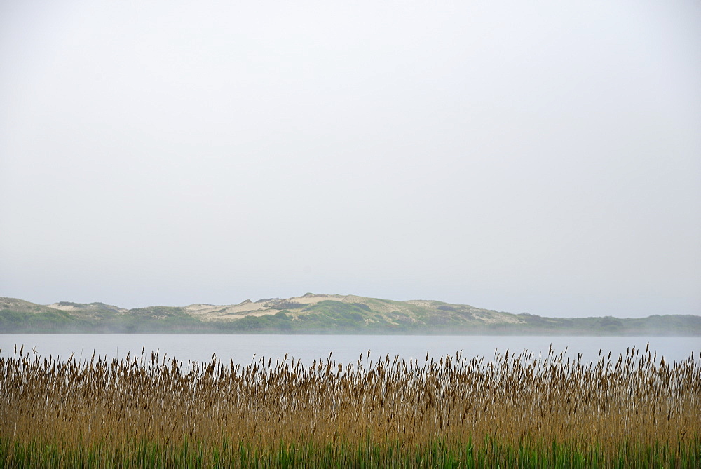 Massachusetts, Cape Cod, Truro, Foggy seascape with reeds