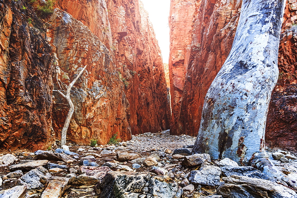 Australia, Outback, Northern Territory, Red Centre, West Macdonnel Ranges, Standley Chasm, Bare trees in rocky canyon