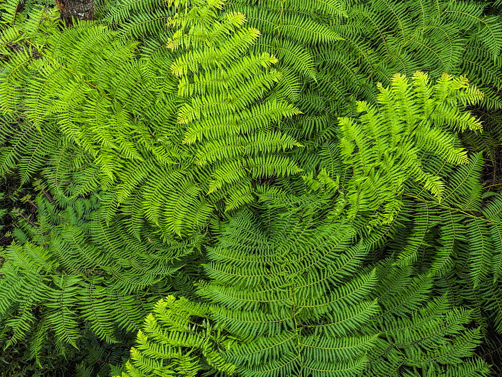 Close-up view of fern