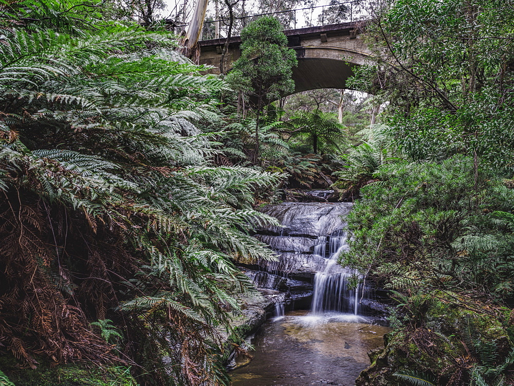 Australia, New South Wales, Blue Mountains National Park, Leura Cascades, Bridge over waterfall in forest