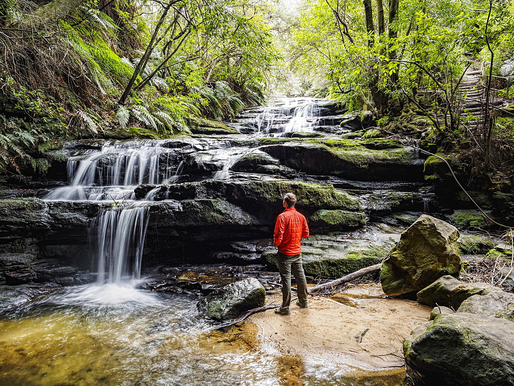 Australia, New South Wales, Blue Mountains National Park, Leura Cascades, Young man standing by waterfall in forest