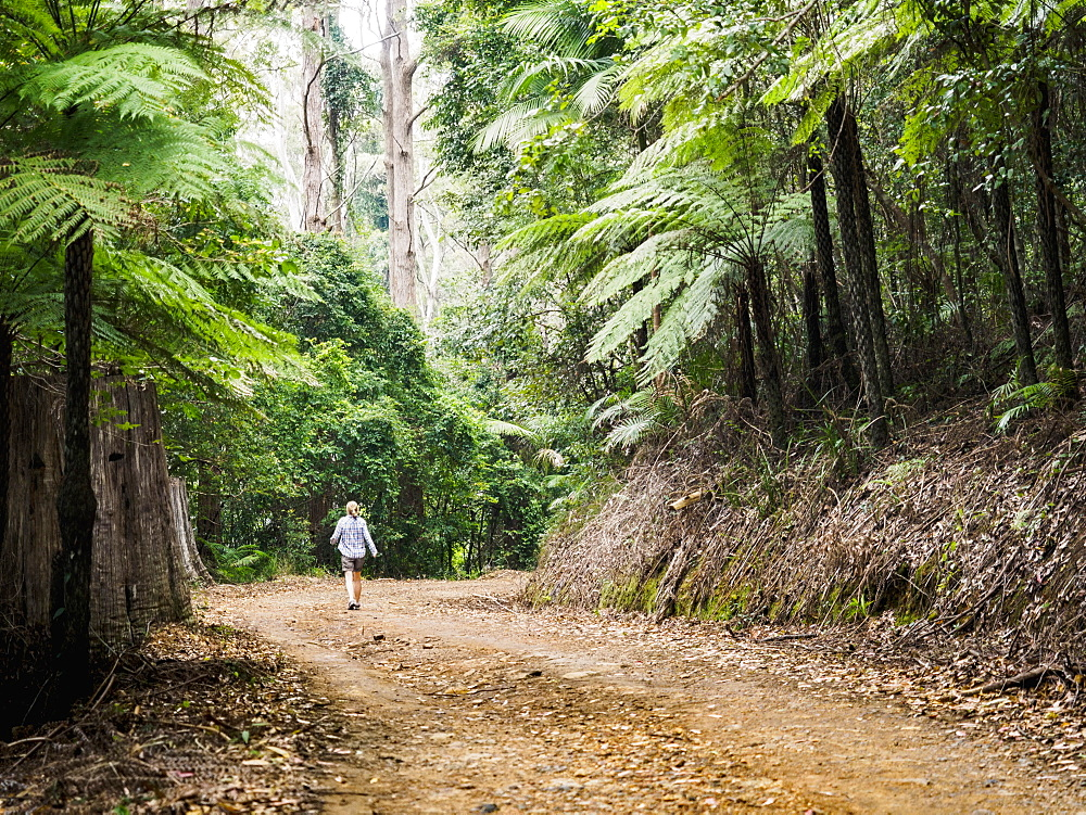 Australia, New South Wales, Port Macquarie, Mature woman walking along dirt road in forest
