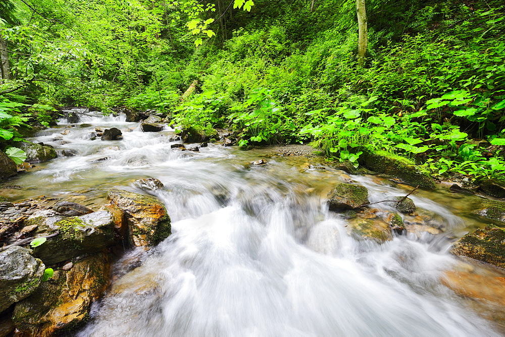 Ukraine, Zakarpattia, Rakhiv district, Carpathians, Stream in forest