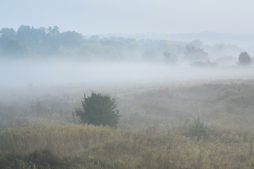 Ukraine, Dnepropetrovsk region, Novomoskovsk district, Fog covering meadow