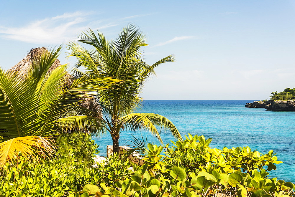 Jamaica, Negril, Palm trees against seascape