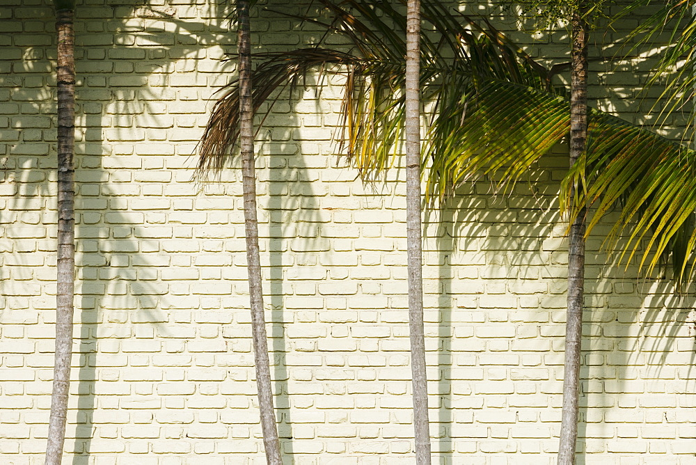 Palm trees against brick wall